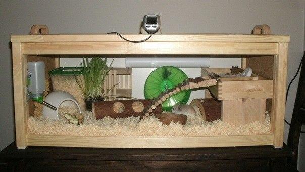 Обустройство аквариума для хомяка своими руками 72