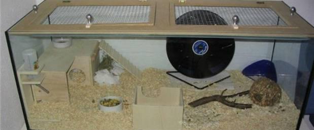 Клетка для джунгарского хомяка своими руками в домашних условиях 69