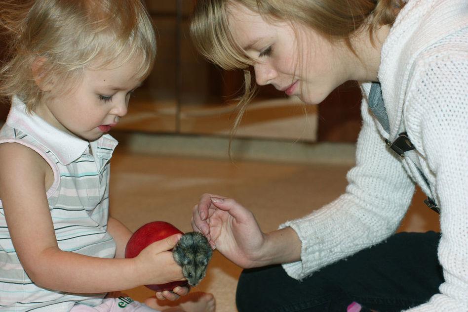 Хомяк и ребенок