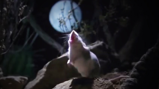 кузнечиковый хомяк воет на луну