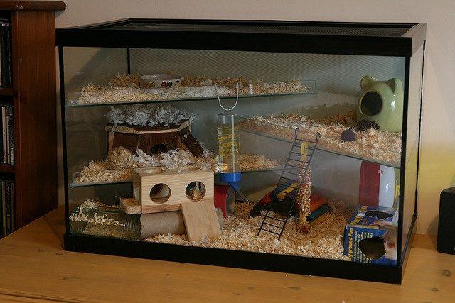 аквариум для хомячка