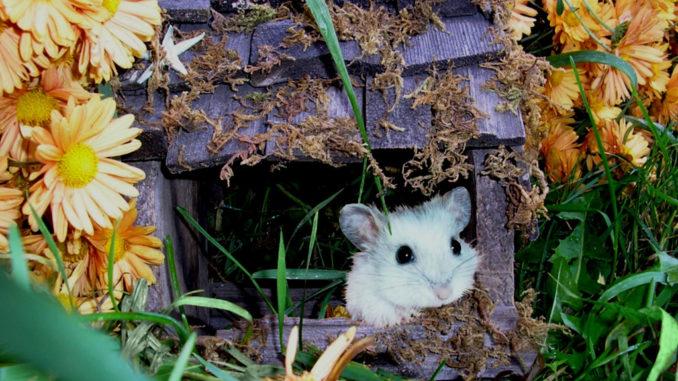 дом для хомячка