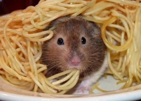 хомяк и макароны