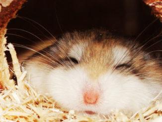 в норке спит хомяк