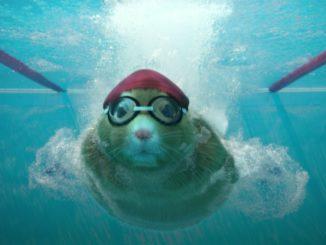 хомяк плавает