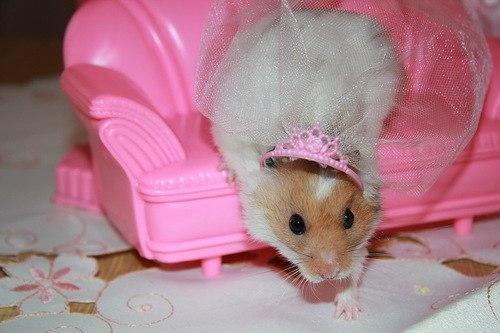 хомячок принцесса