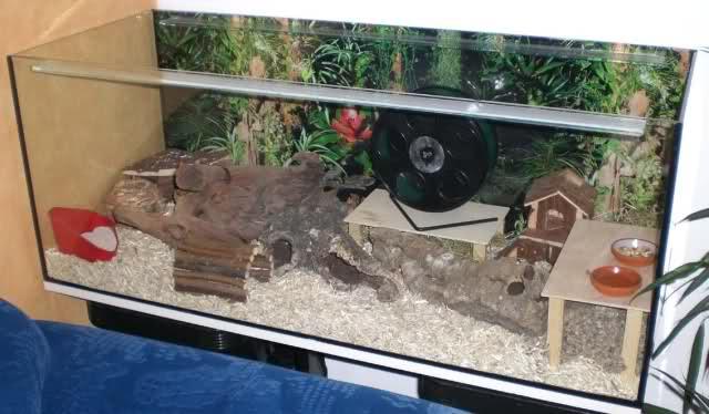 аквариум для хомяка