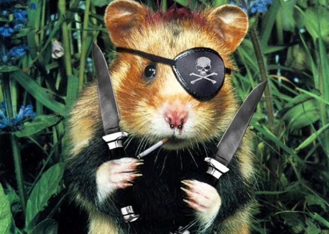 хомяк пират