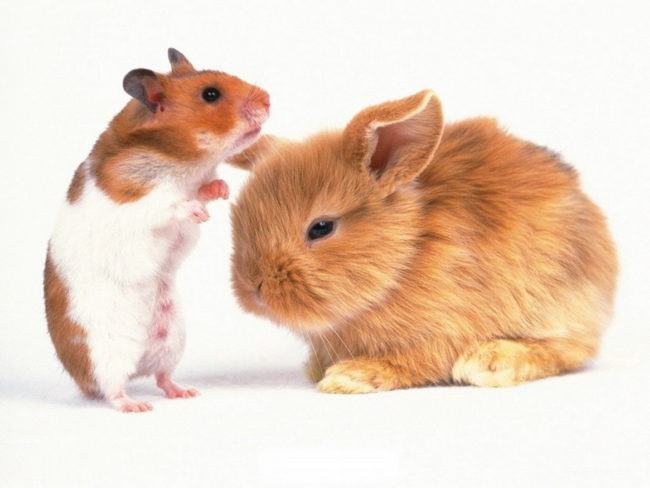 хомяк и кролик