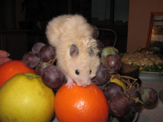 овощи и фрукты для хомяка