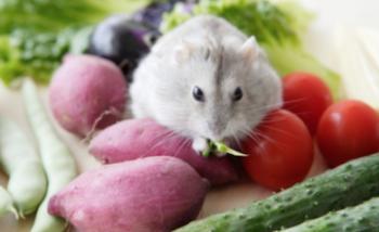 джунгарик сидит на овощах
