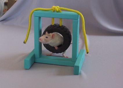 Крыса пролазит через кольцо
