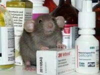 Крыса и лекарство