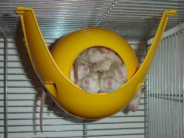 Как сделать домик для крысы 521
