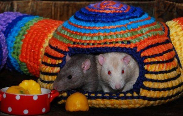 Гамак-нора для крысы своими руками