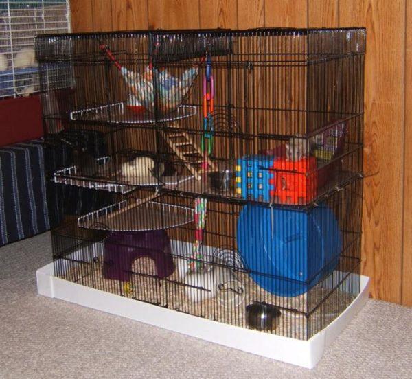 Какой должна быть клетка для крысы