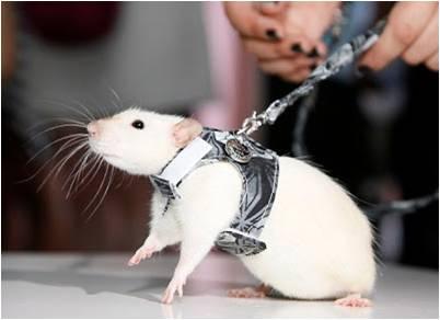 Шлейка для крыс в форме жилета