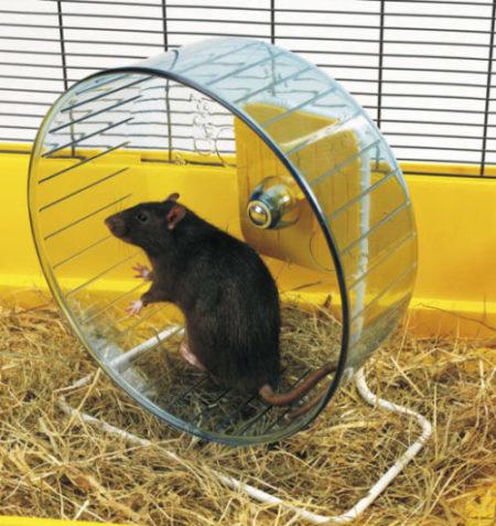Колесо для крысы