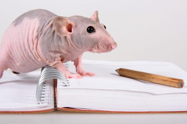 Крыса сфинкс и книга