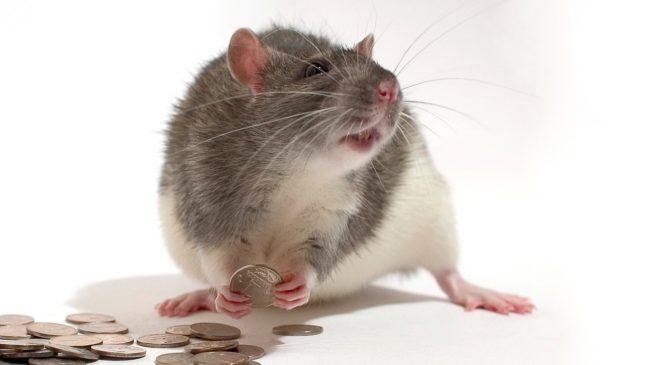 Крыса и деньги