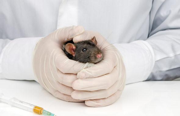 Как вылечить опухоль мозга у крысы thumbnail