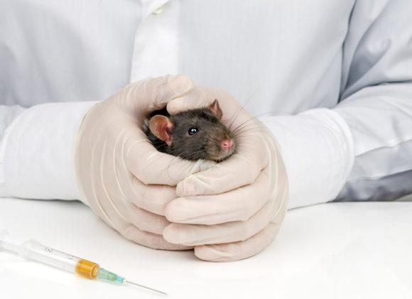Опухоли у домашних крыс: симптомы, лечение, профилактика