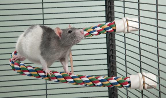 Игрушка для крысы