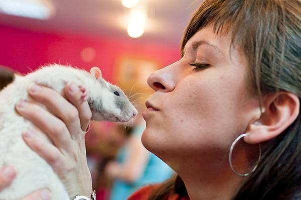 Женщина целует крысу