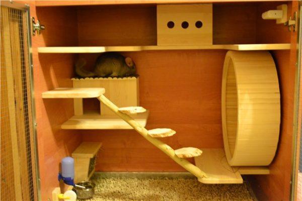 Лестница для шиншиллы