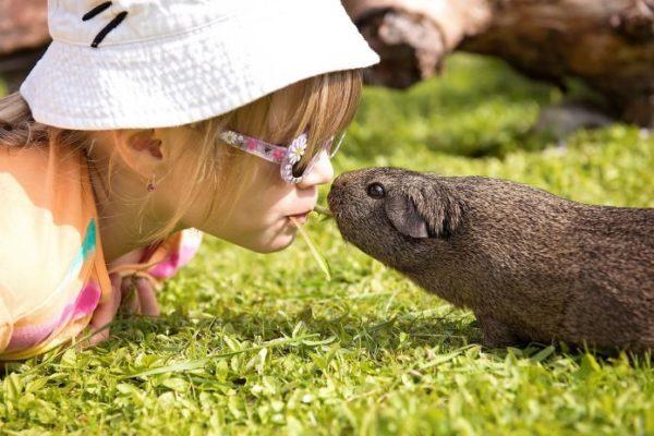Ребенок и морская свинка