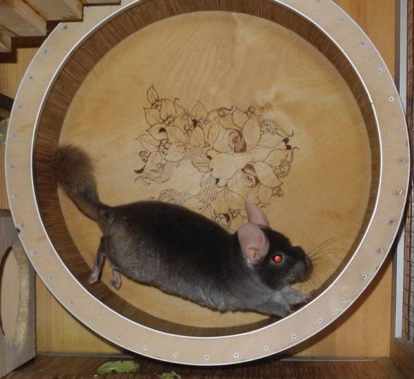 Деревянное колесо для шиншилла