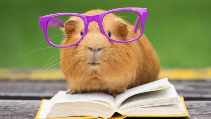 Свинка книжка и очки