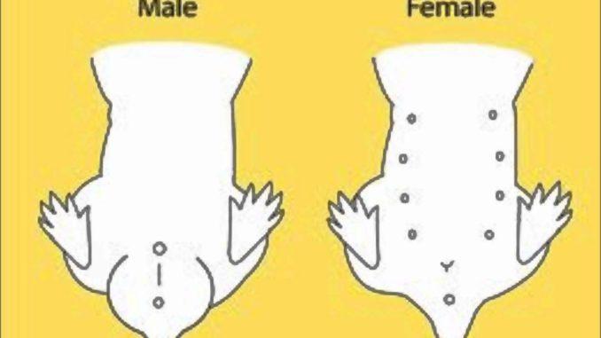 Самец и самка различия