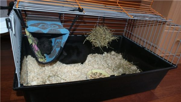 Гамак-домик для морской свинки