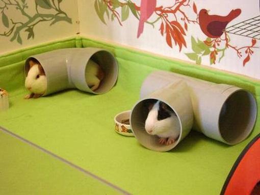 Игрушка для морской свинки тоннель