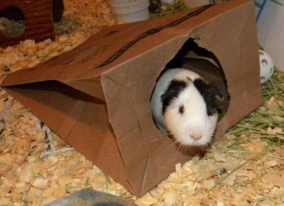 Бумажный пакет игрушка для морской свинки