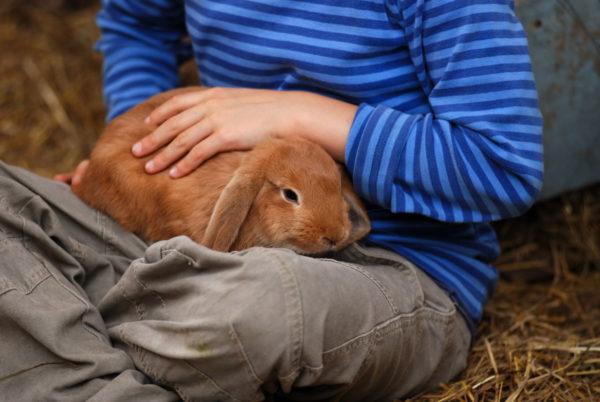 Кролик на руках у мальчика