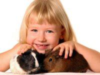 Девочка с морскими свинками