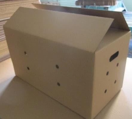 Коробка как переноска для морской свинки