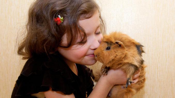 Ребенок целует свинку