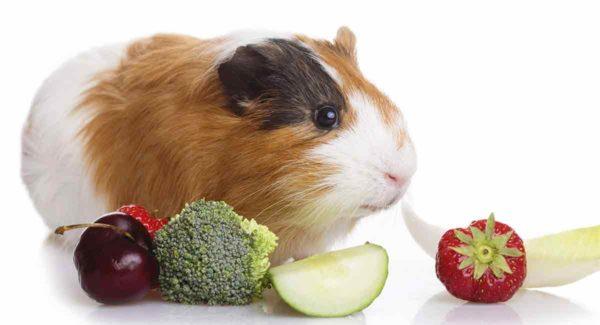 Морская свинка и овощи и ягоды