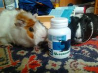 Витамины для морской свинки