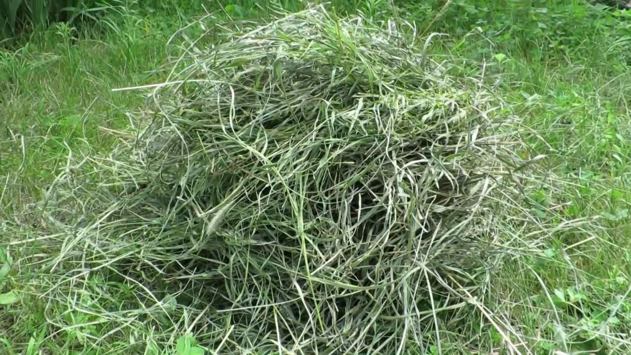 Клок сена