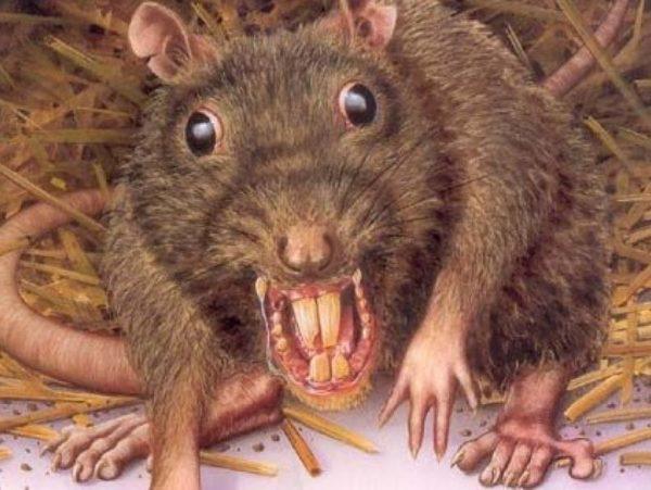 Страшная злая крыса