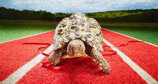 Черепаха на беговой дорожке