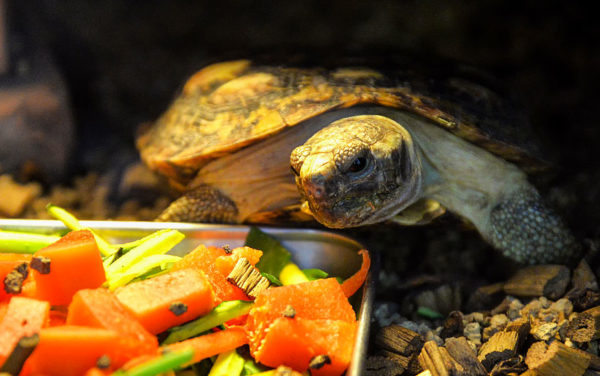 Витаминизированный рацион черепахи