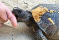 Черепаха кусает человека за палец