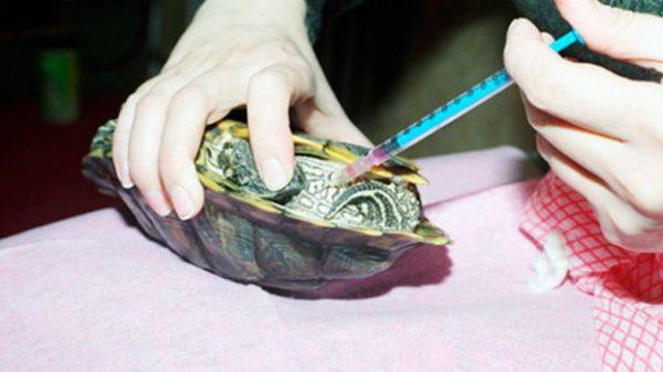 Инъекции витаминов красноухой черепахе