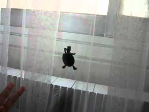 Красноухая черепаха ползет по шторе