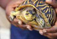 Человек держит черепаху в руках